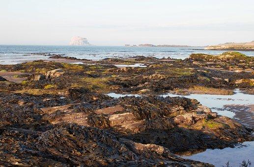 Bass Rock, North Berwick, Scotland, Seashore, Pools