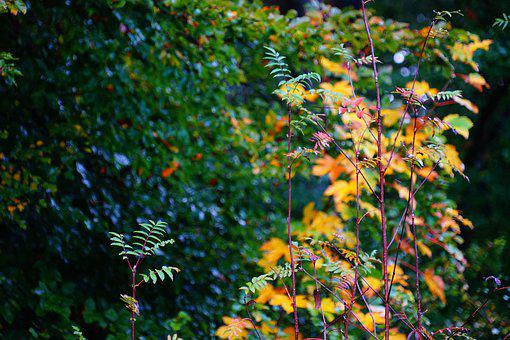 Leaves, Green, Nature, Leaf, Forest, Plant, Tree