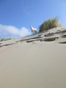 Beach, Play, Dog, Dune, Dunes, Joy, Sand, Sea, Fun