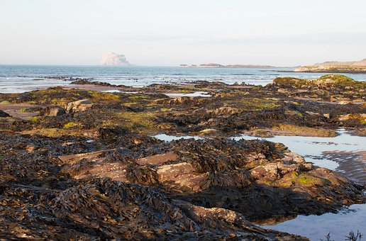 Bass Rock, North Berwick, Scotland, Seashore, Pools