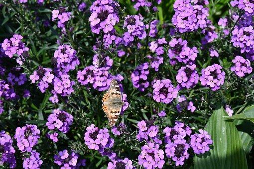 Monarch, Butterfly, Sterling Castle, Garden
