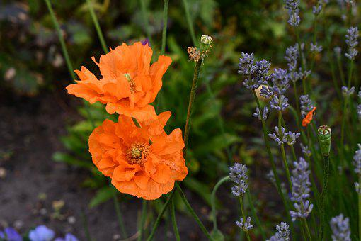 Flowers, Sterling Castle, Gardens, Scotland