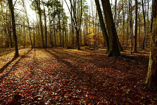 Forest, Autumn, Nature, Forest Path, Trees, Sunlight