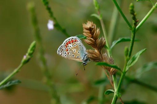 Natural, Nature, Macro, Green, Detail, Colorful, Animal