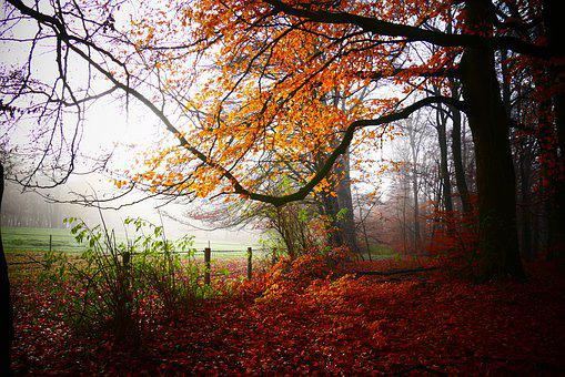 Autumn, Autumn Color, Fall Colors, Leaves, Colorful