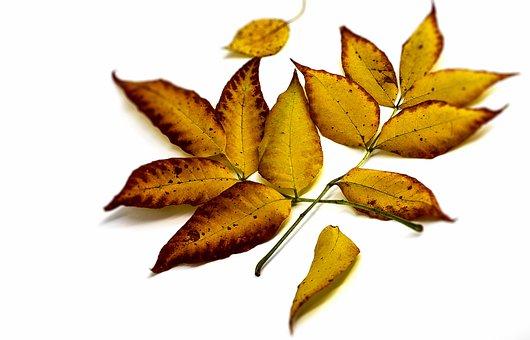 Background, Yellow, Delicious, Closeup, Autumn, Nature