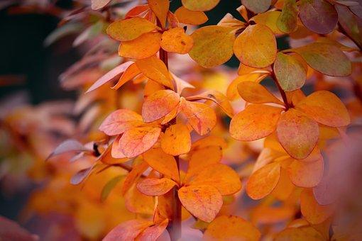 Autumn, Leaves, Colorful, Golden Autumn, Nature, Golden