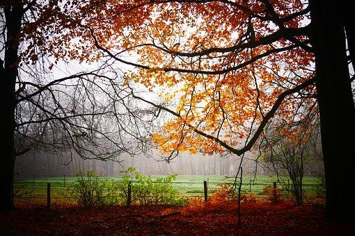 October, November, September, Autumn, Season, Leaves