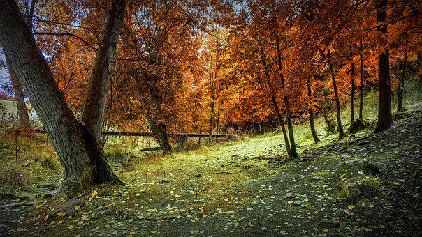 Autumn, Forest, Landscape, Leaves, Trees, Nature, Path