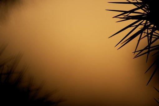 Nature, Outdoor, Wallpaper, Hd, Saguaro, Cactus
