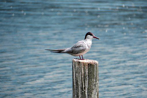 Water, Lake, Sea, Pounded, Bird, Nature, Landscape