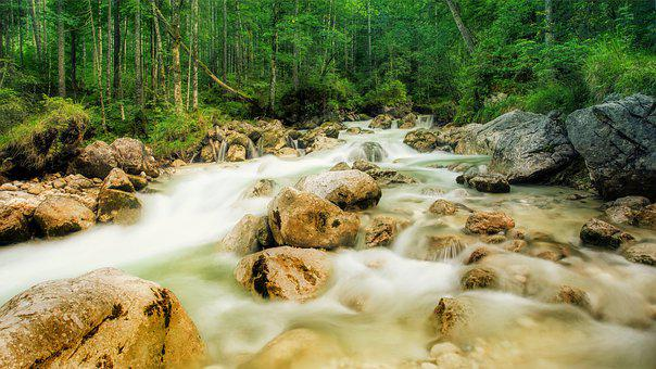Creek, Forest, Rock, Riverbed, Fluent