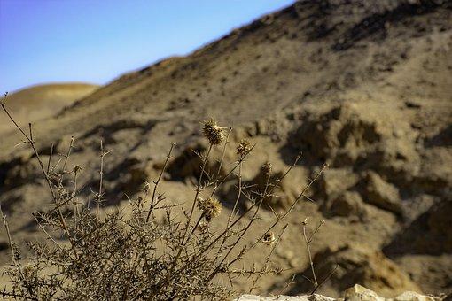 Desert, Dry, Whether, Sand, Landscape, Nature, Hot