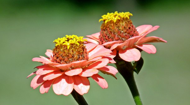Tin, Flowers, Orange, Summer, Nature, Garden, Closeup