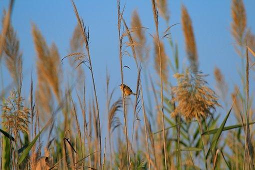 Bird, Wildlife, Wild, Colorful, Nature, Animal