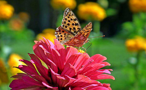 Butterfly, Insect, Tin, Flowers, Nature, Macro