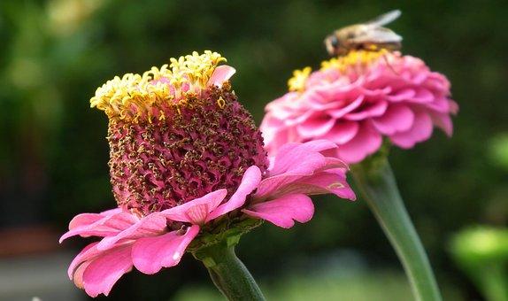 Tin, Flowers, Summer, Nature, Garden, Macro, Closeup