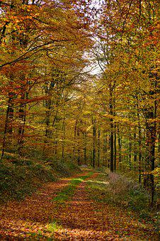 Forest, Forest Path, Autumn, Fall Colors, Trees