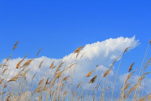 Grassland, Outdoor, Horizon, Clear, Countryside