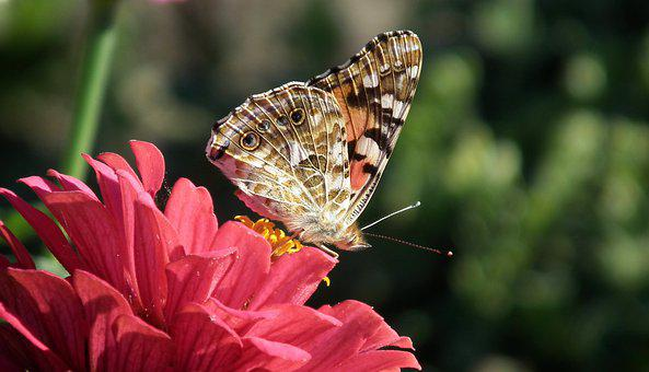 Butterfly, Insect, Flowers, Tin, Nature, Macro, Wings