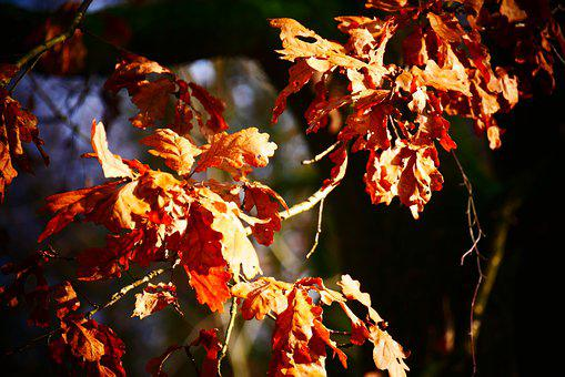 Sheet, Leaves, Nature, Autumn, Colorful, Green, Tree