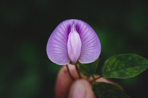 Flower, Macro, Field, Garden, Dark, Green, Leaf