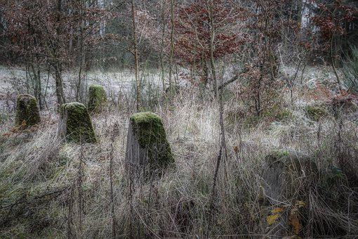 Landscape, Military, Nature, Forest, War, Historically