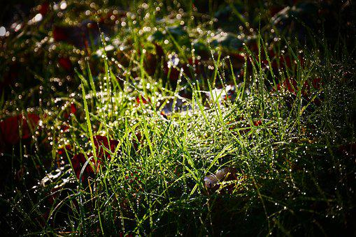 Grass, Dew, Morning, Green, Meadow, Nature, Water