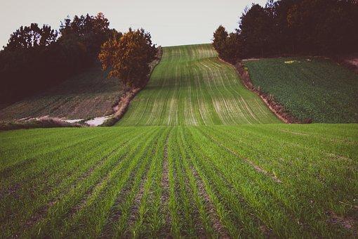 Field, Green, Grass, Nature, Plant, Village