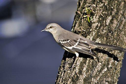 Bird, Songbird, On Tree, Side, Bark, Blue, Sky Blue Sky