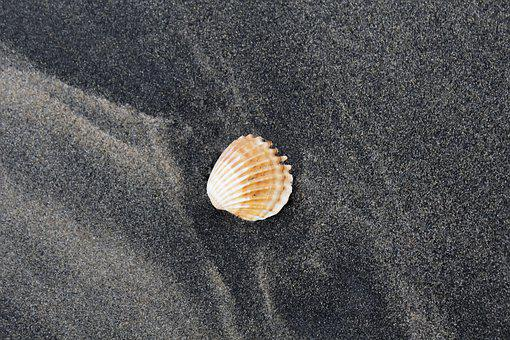 Vacation, Tropical, Nature, Summer, Beach, Sea, Travel