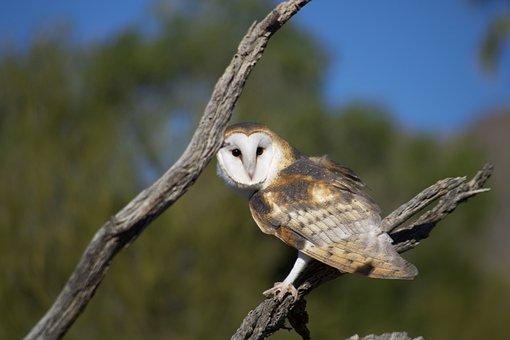Bird, Avian, Feather, Wing, Beak, Fly, Pet, Wild