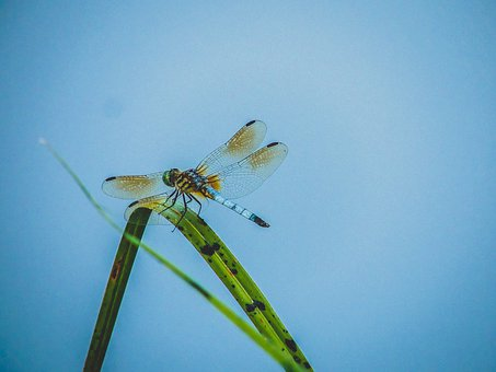 Dragonfly, Bug, Insect, Wings, Nature, Summer, Wildlife