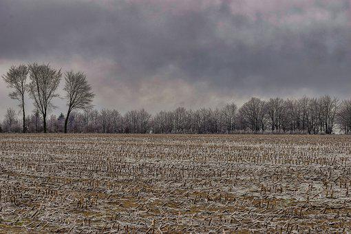 Landscape, Nature, Winter, Trees, Hill, Wintry, Icy