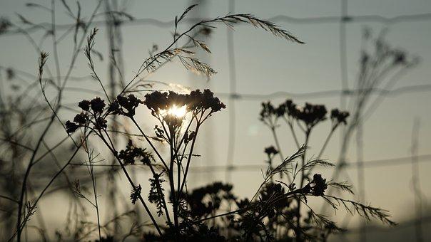 Background, Sunrise, December, Autumn