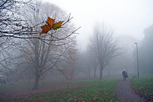 Lost In The Fog, Autumn, Leaves, Forest, Nature, Tree