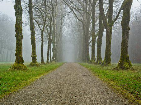 Fog, Away, Trees, Avenue, Autumn, Mood, Autumn Mood
