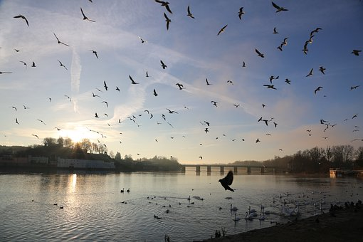 Pigeons, Birds, Wildfowl, Beautiful, Bill, Sky, Freedom