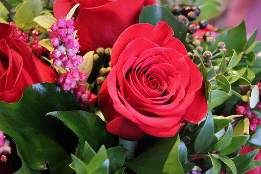 Red Rose, Common Holy, Christmas Decoration, Advent