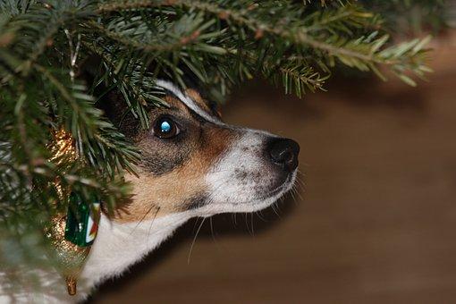 Dog, Christmas Tree, Christmas Present, Christmas, Pets