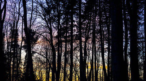 Forest, Twilight, Tree, Lichtspiel, Evening, Sunset