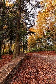 Forest, Autumn, Nature, Landscape, Trees, Secret, Fog