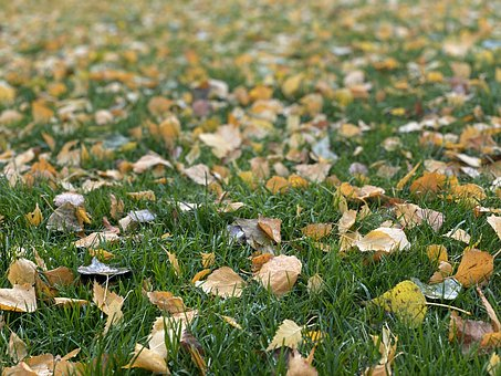 Autumn, Background, Meadow, Grass, Leaves, Colorful
