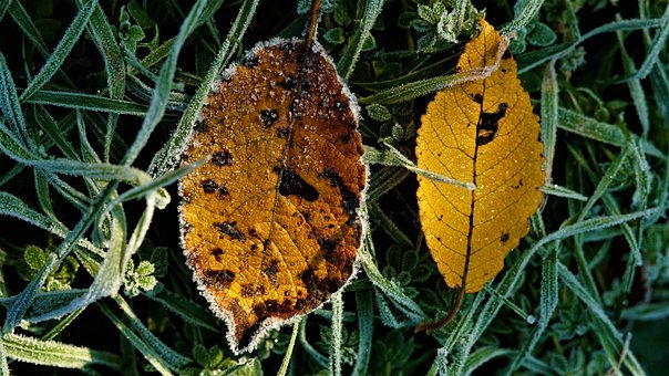 Autumn, Background, Frost, Hoarfrost, Leaves, Colorful