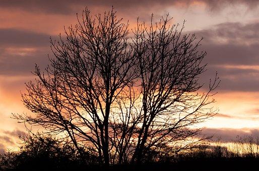 Lone Tree, Single Tree, Sunset, Storm Clouds, Storm