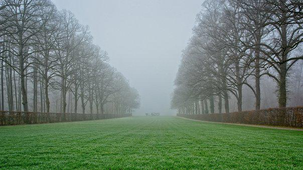 Fog, Morning, Trees, Avenue, Morgenstimmung, Mood