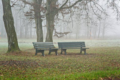 Fog, Foggy, Seat, Bench, Out, Nature