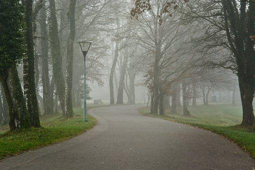 Fog, Foggy, Road, Avenue, Trees, Away, Mood, Nature
