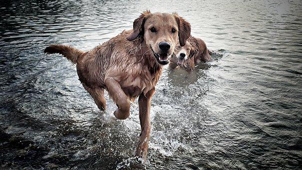Dog, Water, Pet, Nature, Swim, Wet, Landscape, Joy, Fun