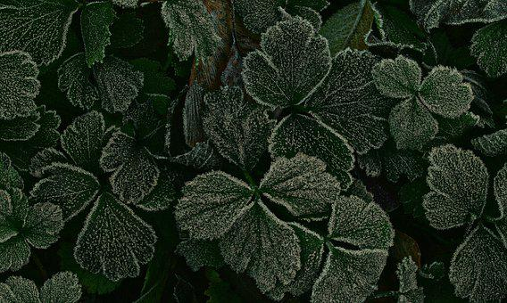 Leaves, Hoarfrost, Ripe, Morning Sun, Cold, Frozen